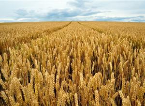 external image Arable-crops-harvest.jpg