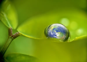 Seeing is believing: The globe, nestling in a raindrop on a leaf