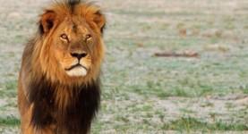 Cecil the Lion BBC